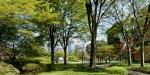flower photography, Japanese cherry blossoms, Shidarezakura or weeping cherry, hanami, Imperial Palace Tokyo, Imperial Palace Tokyo Cherry Blossom Season, photography by Jim Caldwell Redondo Beach